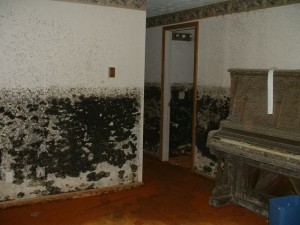 The Development of Mold Problems